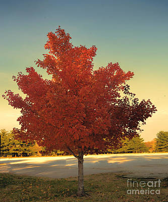 Maple Leaf Art Photograph - Autumn Tree  - Luther Fine Art by Luther Fine Art