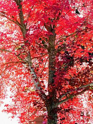 Photograph - Autumn Tree by Michael Dohnalek