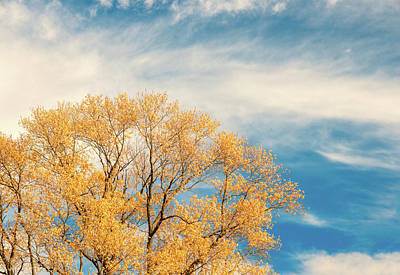 Photograph - Autumn Tree On Autumn Sky by Gary Slawsky