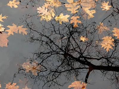 Photograph - Autumn Tree Reflection by Robert Papps