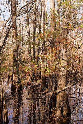 Photograph - Autumn Tree Reflections In The Waccamaw Wetlands by MM Anderson