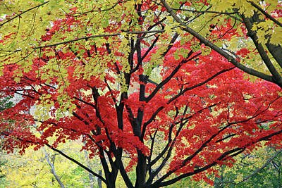 Photograph - Autumn Trees - 2 by Cora Wandel