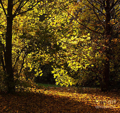Photograph - Autumn Trees 5 by Rudi Prott