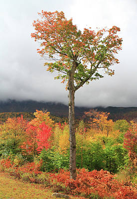 Photograph - Autumn Trees Along The Kancamagus Highway by Dan Sproul