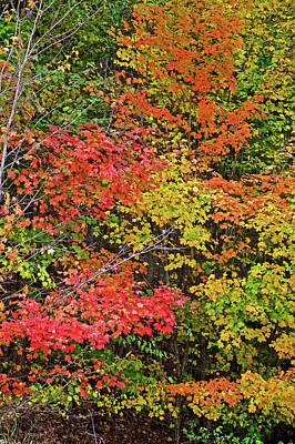Photograph - Autumn Trees Along Trail To North Beach Park In Ottawa County, Michigan by Ruth Hager