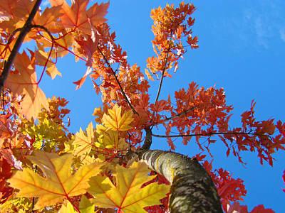 Katharine Hepburn - AUTUMN TREES Artwork Fall Leaves Blue Sky Baslee Troutman by Baslee Troutman