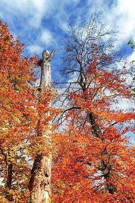 Photograph - Autumn Trees By Day by Elenarts - Elena Duvernay photo