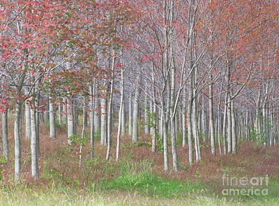 Photograph - Autumn Trees by Christopher L Nelson