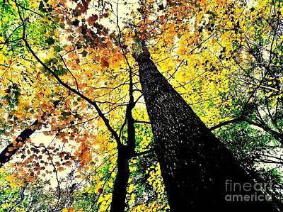 Autumn Trees Digitally Painted  Art Print by Scott D Van Osdol
