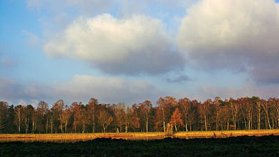 Photograph - Autumn Trees by Gerhard Hoogterp