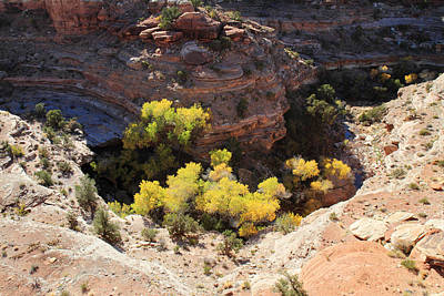 Photograph - Autumn Trees In The Canyon by Pierre Leclerc Photography