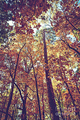 Photograph - Autumn Trees by Joan McCool