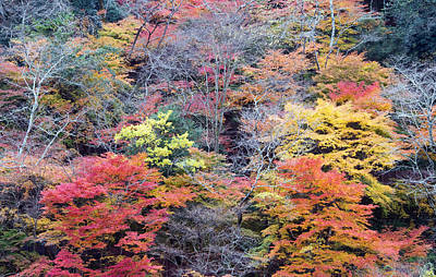 Autumn Colors Photograph - Autumn Trees by Lise-Lotte Larsson