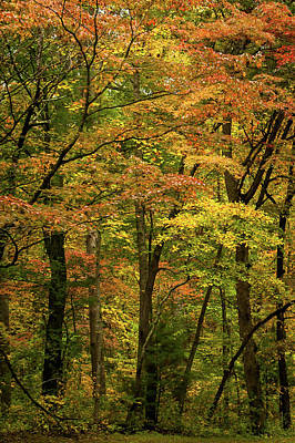 Photograph - Autumn Trees North Carolina by Terry DeLuco