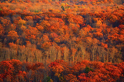 Photograph - Autumn Trees by Raymond Salani III