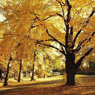 Mannequin Dresses - Autumn trees by Roman Aj