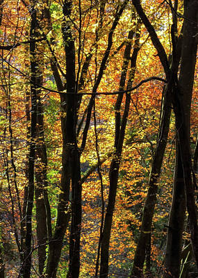 Photograph - Autumn Trees by Shirley Mitchell