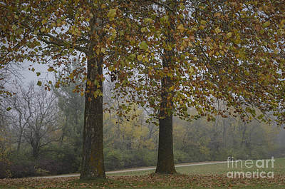 Photograph - Autumn Trees With Fog by Tamara Becker