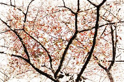 Photograph - Autumn Treetop Abstract by Sharon Woerner