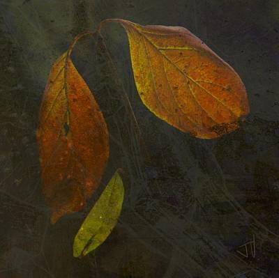 Photograph - Autumn Trio by Jim Vance