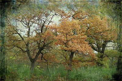 Photograph - Autumn Trio by Scott Kingery