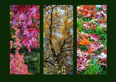 Photograph - Autumn Triptych by Martina Fagan
