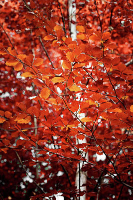 Photograph - Autumn Triumph by Philippe Sainte-Laudy