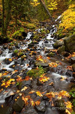 Maple Season Photograph - Autumn Tumbles Down by Mike  Dawson