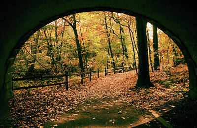 Photograph - Autumn Tunnel Vision by Jessica Jenney
