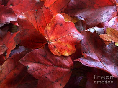 Photograph - Autumn Twilight Photograph by Kristen Fox