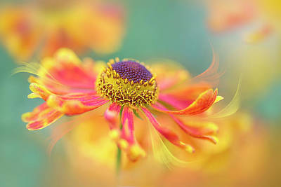 Sneezeweed Photograph - Autumn Twirl by Jacky Parker
