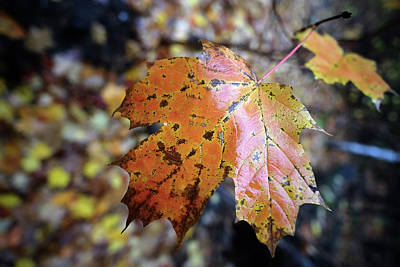 Photograph - Autumn Vibrance by Patrick Groleau