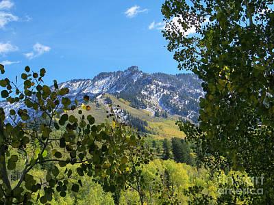 Autumn View Through Aspen Leaves Art Print