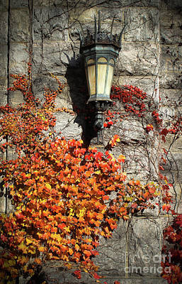 Photograph - Autumn Vines  by Colleen Kammerer