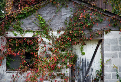 Photograph - Autumn Vines by Fred Lassmann