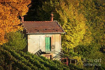 Autumn Vineyard Art Print