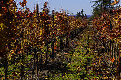 Grapevine Photograph - Autumn Vineyard Colors by Garry Gay