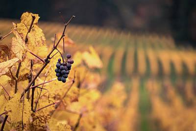 Autumn Vineyard Art Print by Jason Clarke