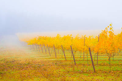 Photograph - Autumn Vineyard by Larry Goss