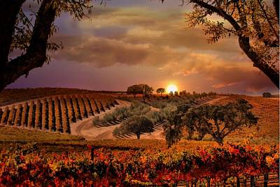 Autumn Vineyard Print by Stephanie Laird