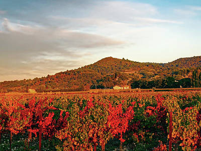 Pastoral Vineyard Photograph - Autumn Vineyard by Thomas Tixtaaz