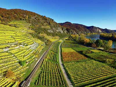 Pastoral Vineyard Photograph - Autumn Vineyards - Germany by Chris De Wit