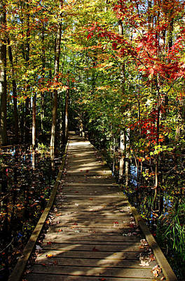 Photograph - Autumn Walk by Debbie Oppermann