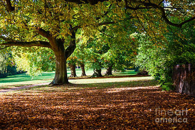 Autumn Walk In The Park Art Print