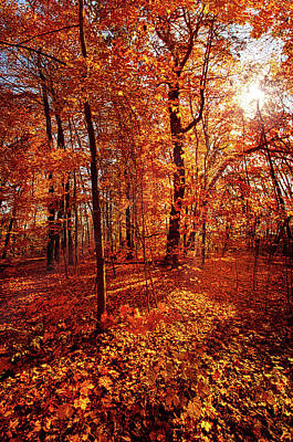 Photograph - Autumn Walk by Phil Koch