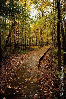 Photograph - Autumn Walk by Van Corey