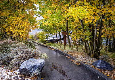Photograph - Autumn Walkway by Cat Connor