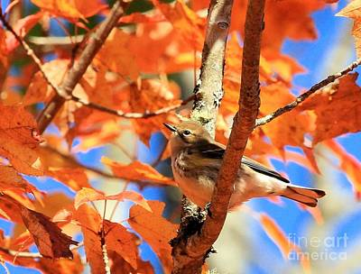 Photograph - Autumn Warbler by Debbie Stahre
