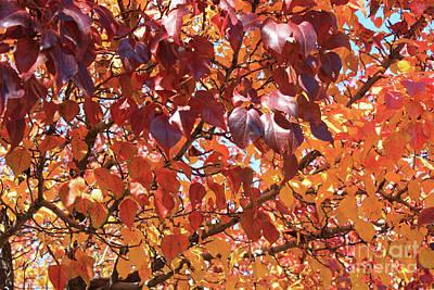 Autumn Warmth Art Print