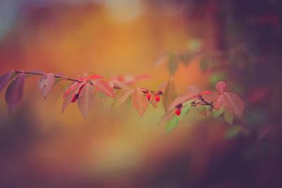 Virginia Photograph - Autumn Warmth by Shane Holsclaw